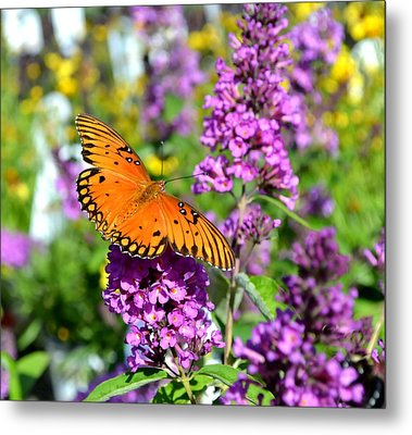 Metal Print featuring the photograph Passion Butterfly by Deena Stoddard