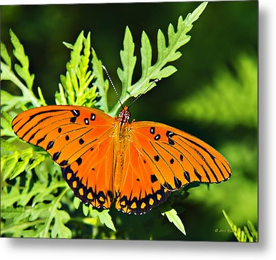 Passion Butterfly Metal Print by Walter Herrit