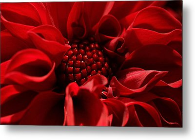 Passion Metal Print by Connie Handscomb