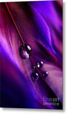 Treasures Within Metal Print