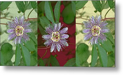 Passion Flower Triptych Metal Print