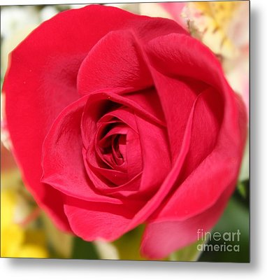 Metal Print featuring the photograph Passion by Judy Palkimas