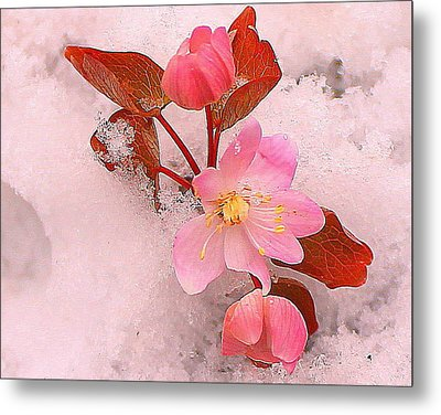 Metal Print featuring the photograph Passionate Pink by Candice Trimble