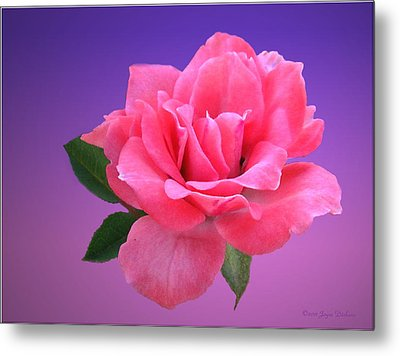 Metal Print featuring the photograph Passionate Pink by Joyce Dickens