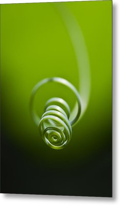Passionflower Tendril Metal Print by Steven Schwartzman