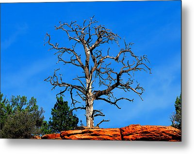 Metal Print featuring the photograph Past Prime by Greg Norrell