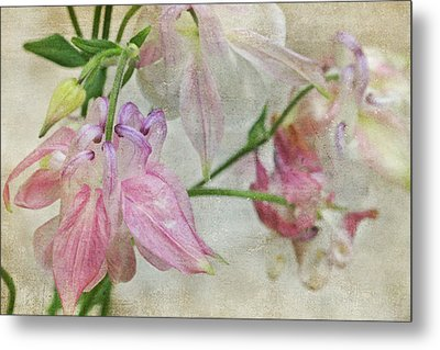 Metal Print featuring the photograph Pastel Columbines by Peggy Collins