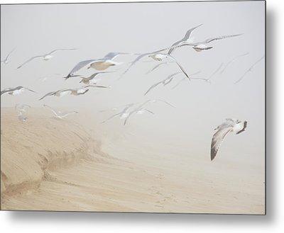 Pastel Gulls In Fog Metal Print