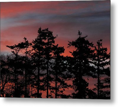 Metal Print featuring the photograph Pastel Silhouettes by Suzy Piatt