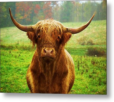 Pasture Portrait Metal Print