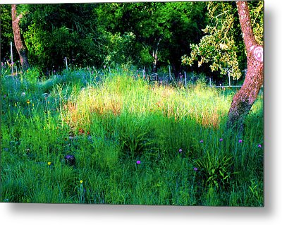 Patch Of Morning Sunlight Wildflowers  Metal Print by ARTography by Pamela Smale Williams