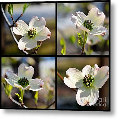 Patched Together Dogwoods Metal Print by Eva Thomas