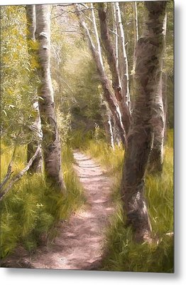 Path 1 Metal Print by Pamela Cooper