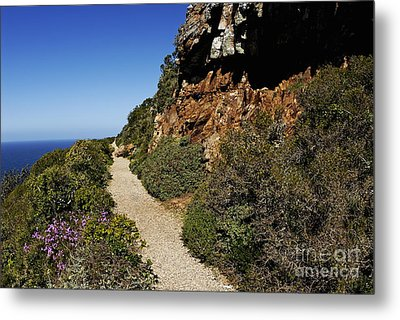 Path At Cape Of Good Hope Metal Print by Sami Sarkis