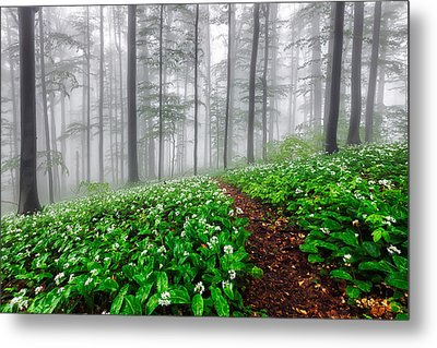 Path In The Mist Metal Print by Evgeni Dinev