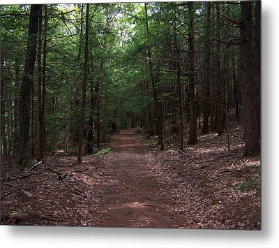 Path In The Woods Metal Print by Catherine Gagne
