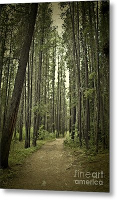 Path In The Woods Metal Print by Ivy Ho