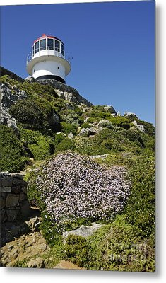 Path Leading To Lighthouse At Cape Point Metal Print by Sami Sarkis