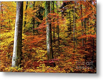 Metal Print featuring the photograph Path Of Autumn 1 by Charles Lupica