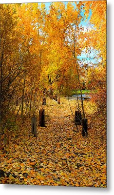 Metal Print featuring the photograph Path Of Fall Foliage by Kevin Bone