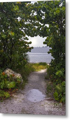 Path Through The Sea Grapes Metal Print by Marvin Spates