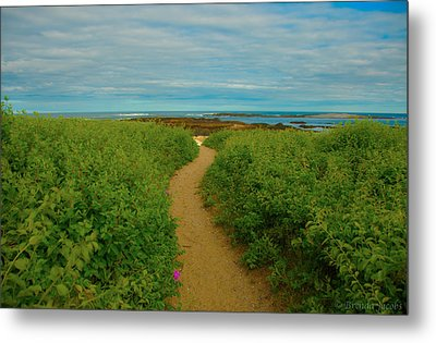 Metal Print featuring the photograph Path To Blue by Brenda Jacobs