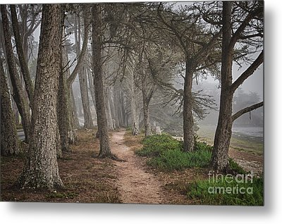 Pathway Metal Print by Alice Cahill