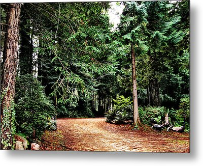 Pathway In The Forest Metal Print by Rafael Escalios