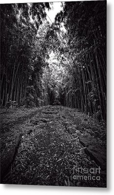 Pathway Through A Bamboo Forest Maui Hawaii Metal Print by Edward Fielding