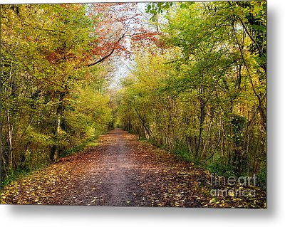Pathway Through Sunlit Autumn Woodland Trees Metal Print by Natalie Kinnear