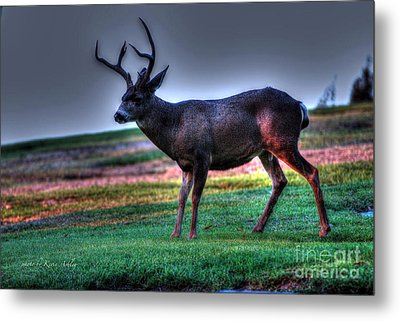 Patience Metal Print by Kevin Ashley