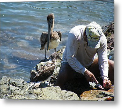 Metal Print featuring the photograph Patient Pelicano  by Brian Boyle