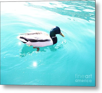 Metal Print featuring the photograph Pato by Vanessa Palomino
