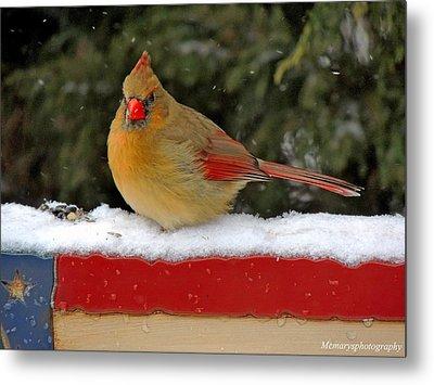 Patriotic Cardinal Metal Print by Mary Williamson