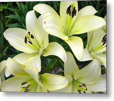 Pattern Of Petals Metal Print
