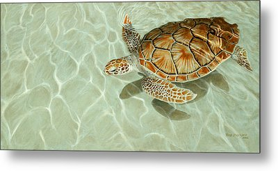 Patterns In Motion - Portrait Of A Sea Turtle Metal Print by Rob Dreyer