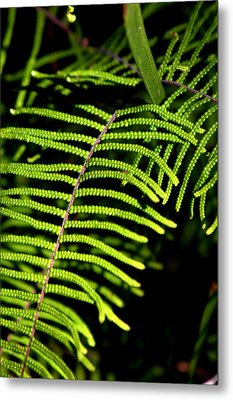 Metal Print featuring the photograph Pauched Coral Fern by Miroslava Jurcik