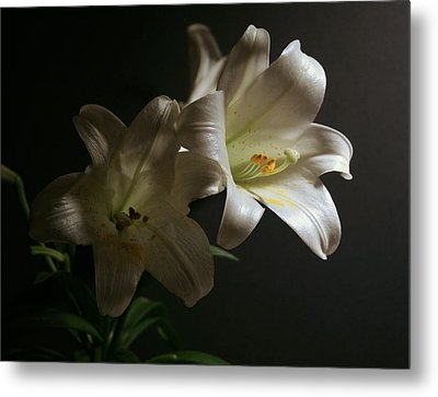 Metal Print featuring the photograph Peace Lily by Cathy Harper