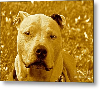 Peace To End Dog Fighting Metal Print by Q's House of Art ArtandFinePhotography
