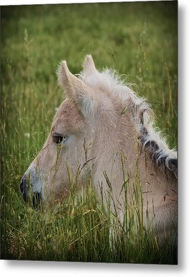 Peaceable World Metal Print