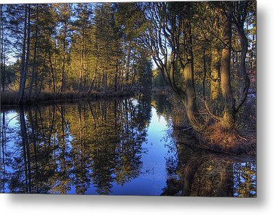 Peaceful Cedar Metal Print by Greg Vizzi