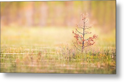 Peaceful Metal Print by Janne Mankinen