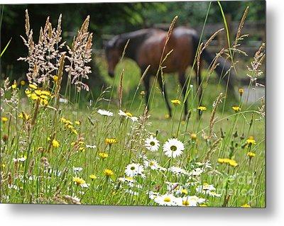 Peaceful Pasture Metal Print