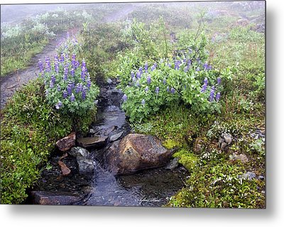 Peaceful  Metal Print by Sylvia Hart