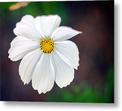 Peaceful Metal Print by Tammy Smith