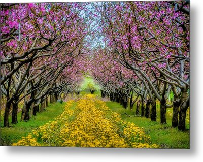 Peach Blossoms Dandelion Carpet Metal Print