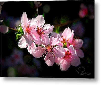 Metal Print featuring the photograph Peach Blossoms by Ludwig Keck