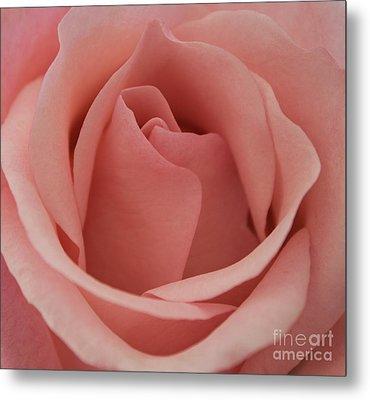 Peach Rose Metal Print by Arlene Carmel
