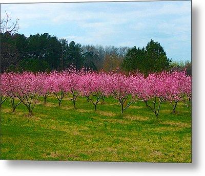 Peach Tree Grove By Jan Marvin Metal Print
