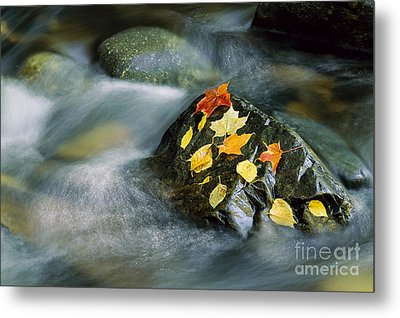 Metal Print featuring the photograph Peacham Brook In Fall by Alan L Graham